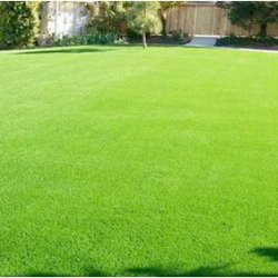 turf-suppliers-and-turf-laying